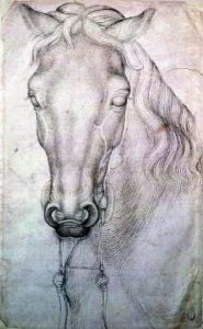Head of a Horse by Antonio Pisanello