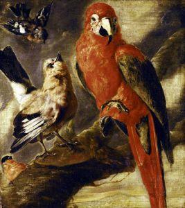Macaw and Bullfinch by Flemish School