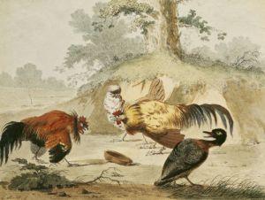 Cocks Fighting by Melchior de Hondecoeter