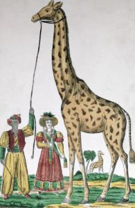 The Giraffe Presented to the King from the Pasha of Egypt by French School