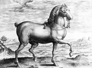 Equus Germanus by Jan van der Giovanni Stradano Straet
