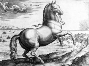 Equus Hispanus by Jan van der Giovanni Stradano Straet