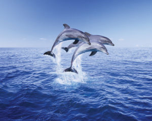 Dolphin Trio by Anonymous