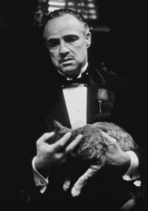 The Godfather (Cat B&W) by Celebrity Image