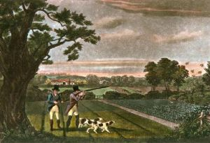 Partridge (Restrike Etching) by Robert Havell