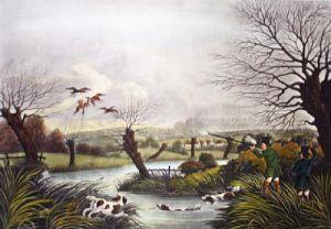 Wild Duck (Restrike Etching) by Robert Havell