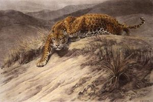 Stealth (Leopard) (Restrike Etching) by Herbert Thomas Dicksee