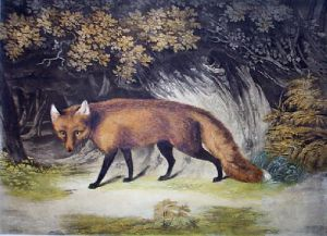 Under Cover (Fox) (Restrike Etching) by Anonymous