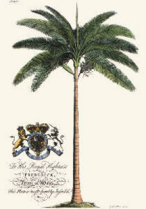 Palm Pl.IV Female Palm Tree (Restrike Etching) by Georg Dionysus Ehret