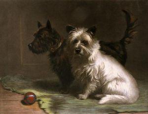 Scottie & Khaki (Restrike Etching) by Margaret Collyer