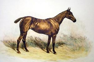 Horse (Restrike Etching) by John Emms