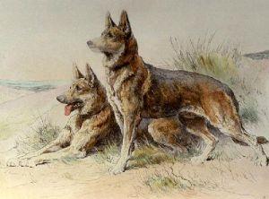 Alsatians (Restrike Etching) by Herbert Thomas Dicksee