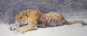 Juicy Bone (Tiger) (Restrike Etching) by Herbert Thomas Dicksee