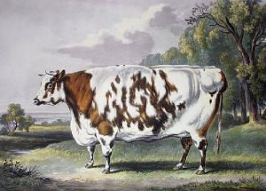 Everingham Cow, The (Restrike Etching) by William Henry Davis