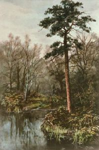 Forest Pool (Restrike Etching) by Walter Boodle