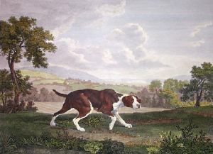 Spanish Pointer (Restrike Etching) by George Stubbs