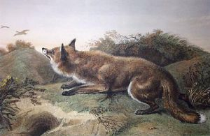 Poacher (Restrike Etching) by Sir Edwin Henry Landseer
