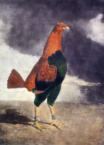The Trimm'd Cock (Restrike Etching) by Benjamin Marshall