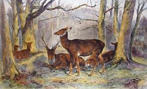 Repose (Group of Deer) (Restrike Etching) by Rosa Bonheur