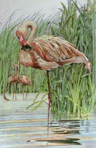 Flamingo (Restrike Etching) by Joanna Willard