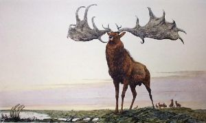 Great Elk (Restrike Etching) by Anonymous