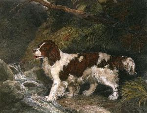 The Spaniel (Restrike Etching) by Philip Reinagle