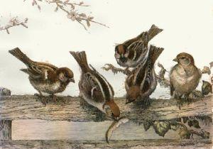 Tree Sparrows (Restrike Etching) by Winifred Austen