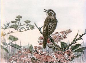Sedge Warbler (Restrike Etching) by Anonymous