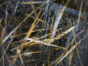 Grass under frozen ice by Assaf Frank