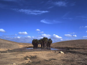 Oasis in desert, Dimona, Israel by Assaf Frank