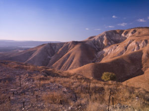 Golan Heights, dried grass on hill by Assaf Frank