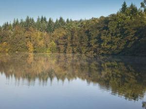 Trees near lake, Berkshire England by Assaf Frank