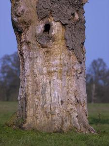 Old dead Oak tree trunk by Assaf Frank