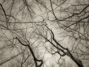Tree branches aginst sky by Assaf Frank