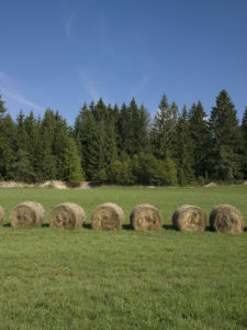 Haystack Rolls on Grass Field, Trees and sky, Jura, Fance by Assaf Frank