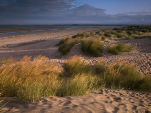 Sand dunes and grass, West wittering beach, UK by Assaf Frank