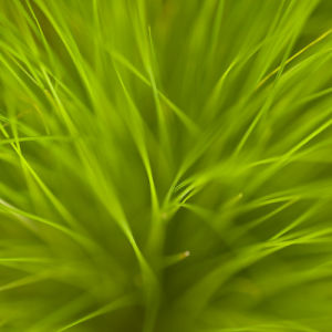 Close-up of grass by Assaf Frank