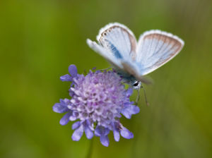 Butterfly on Flower by Assaf Frank