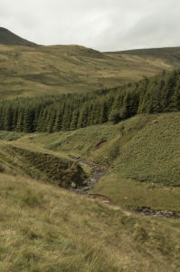 Stream and trees in a valley, Wales by Assaf Frank