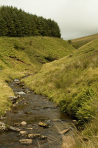 Stream through valley, Wales, UK by Assaf Frank