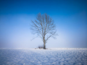 Single tree against blue sky in snow by Assaf Frank
