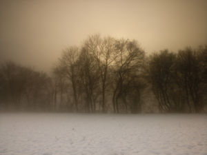 Row of trees in the mist with snow at dusk by Assaf Frank