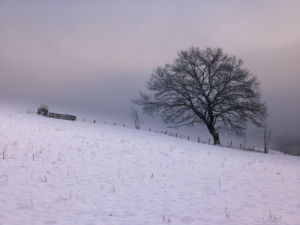 Single Tree in Snow and Mist by Assaf Frank