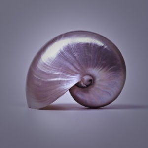 Pearl coiled sea shell close-up by Assaf Frank