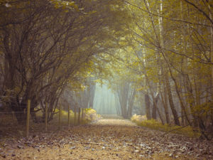 Walkway path in forest by Assaf Frank
