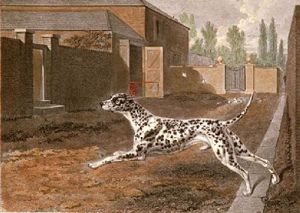 Dalmation (Restrike Etching) by Philip Reinagle