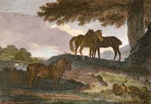 Ponies (Restrike Etching) by Benjamin Marshall