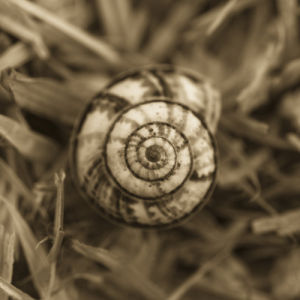 Close up of a coiled Shell on Straw Background by Assaf Frank