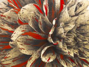 Extreme Close-up of Dahlia Petals by Assaf Frank