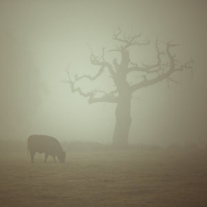 Single Tree in mist and fog by Assaf Frank